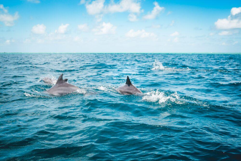 delfines-avistamiento-tenerife-hotel-villa-mandi