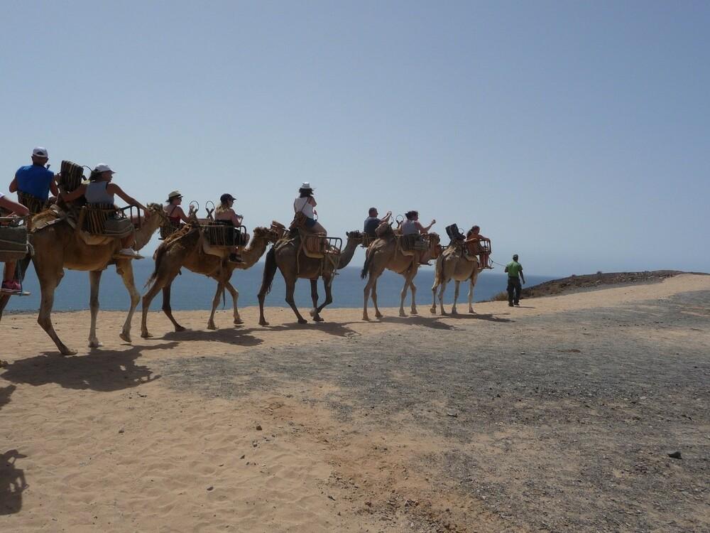 paseo en camello en tenerife