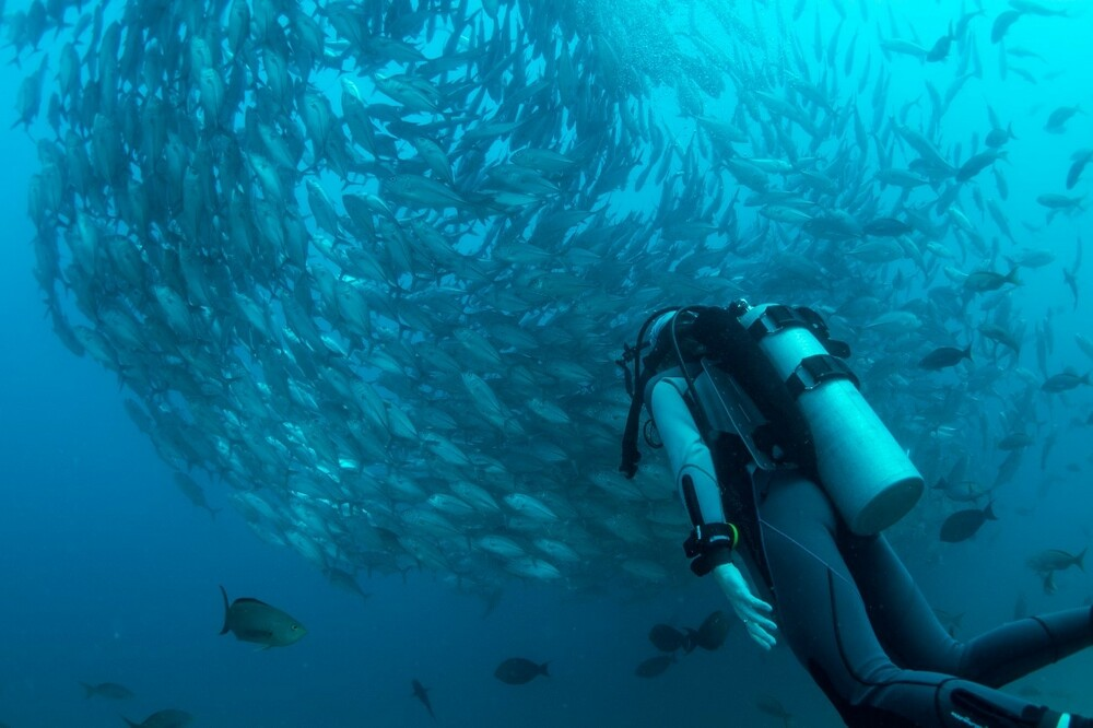 Submarinismo en Tenerife